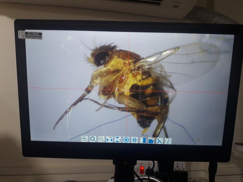mosquito with SZM6745 and HDMI CAMERA